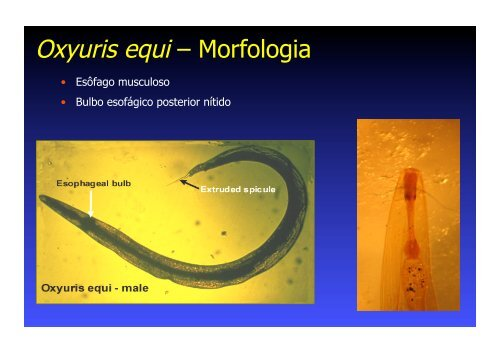 oxyuris equis metastatic cancer cells