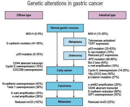 gastric cancer of progression ?como es el virus del papiloma humano en la mujer