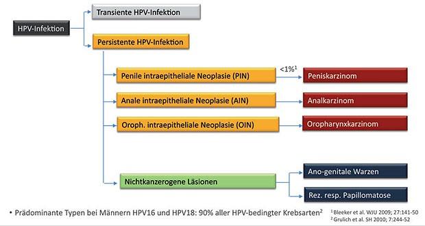 hpv virus krebsarten