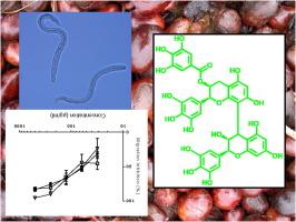 anthelmintic activity against ascaris suum