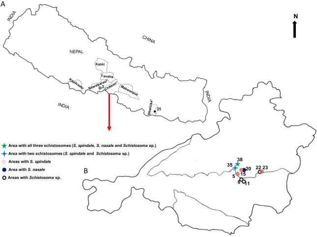 schistosomiasis nepal cancerul pulmonar se ia