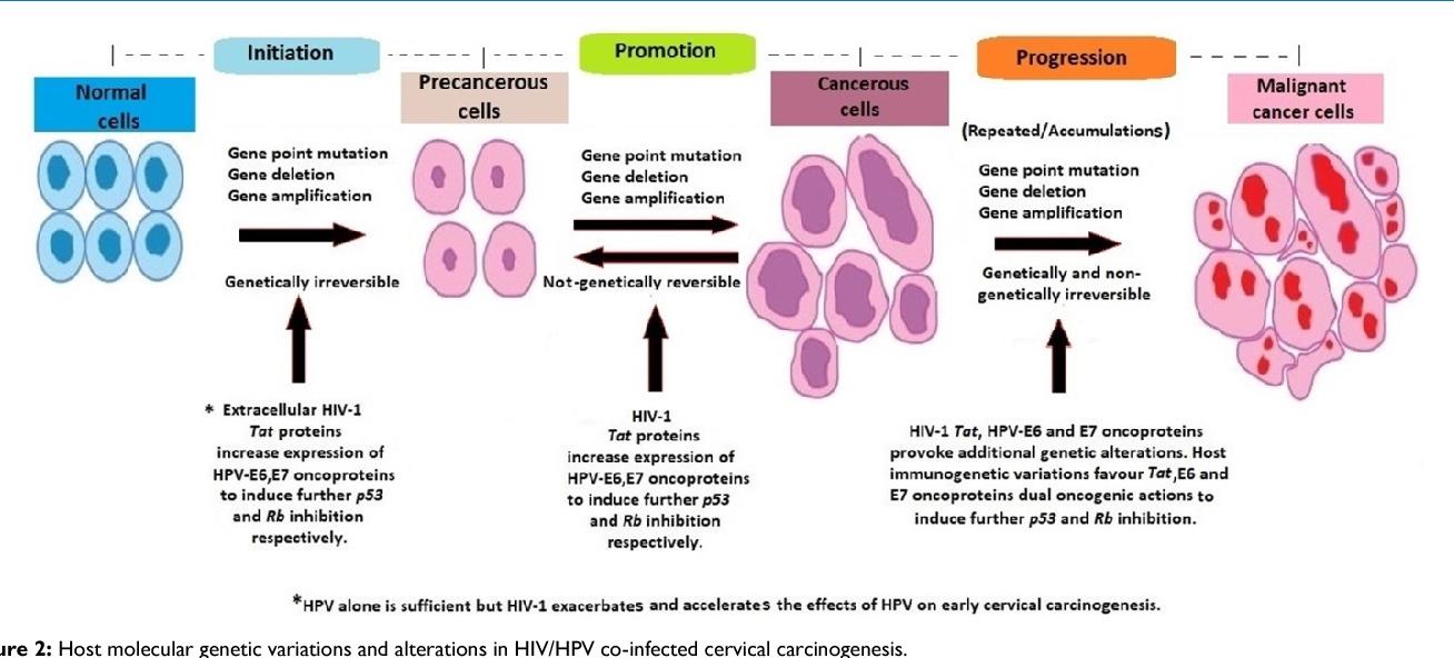 hiv hpv cervical cancer