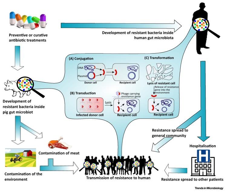 dysbiosis gut microbiota