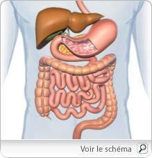 virus papiloma humano y cancer de mama inverted urothelial papilloma histology