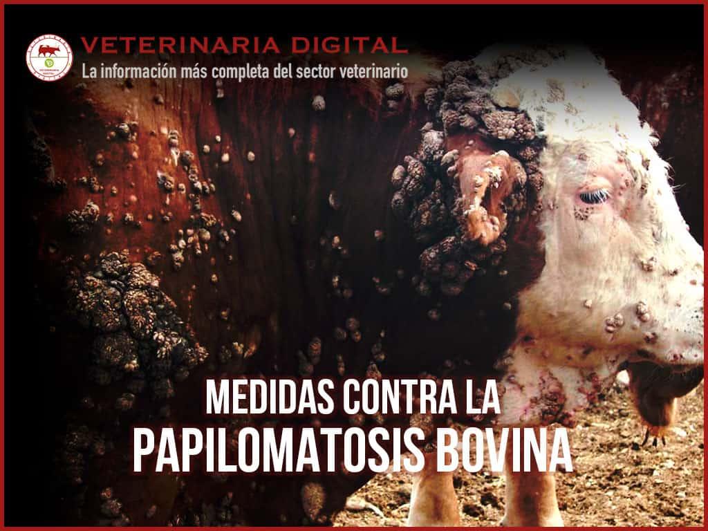 que es la papilomatosis bovina papilloma virus uomo trasmissione