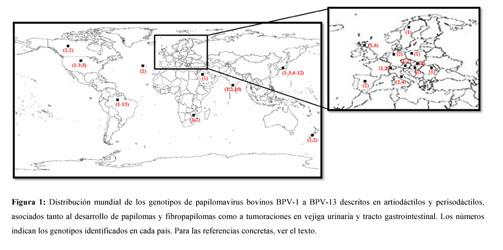 human papillomavirus vaccine gardasil side effects papilloma virus al naso