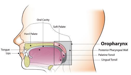 human papillomavirus may cause cancer of