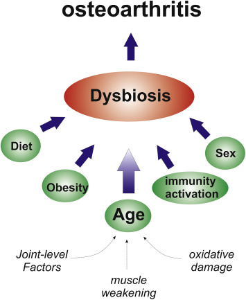 dysbiosis and obesity