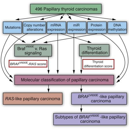 papillary thyroid cancer with braf mutation