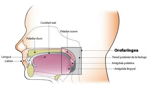 hpv cancer laringe