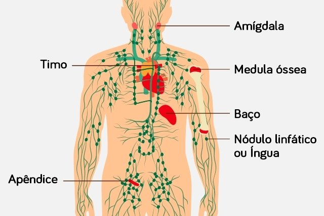 cancer linfatico hodgkin sintomas