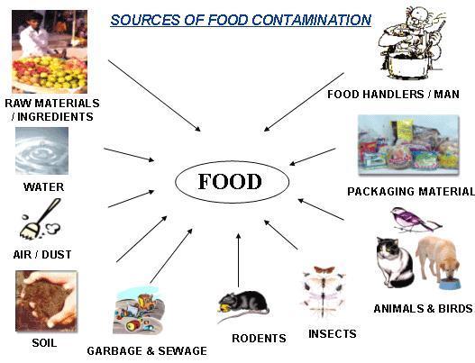 5 alimente pentru eliberarea corpului de metale grele