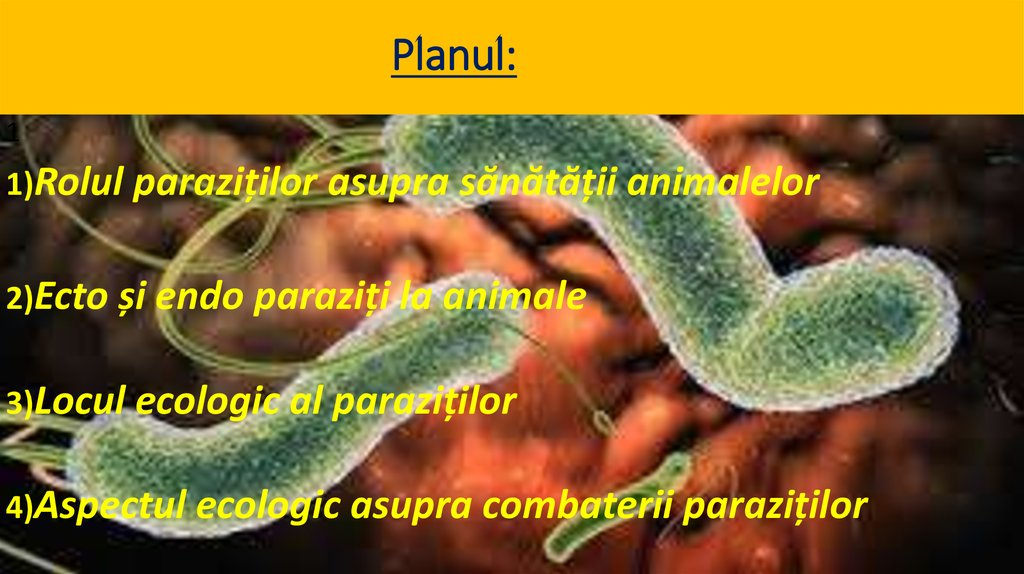 human papillomavirus infection on finger plantar wart home remedy banana