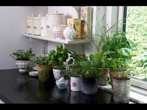 Bolile plantelor de apartament– un pericol ușor de îndepărtat • Casa și Grădina