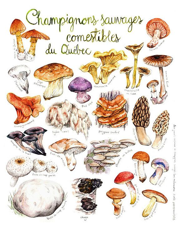 ciuperci jumbo