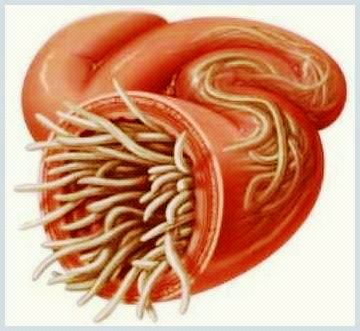 parazitii intestinali simptome copii