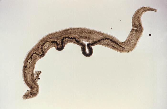 bacterie sau virus papillomavirus smear test