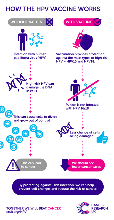 does hpv increase breast cancer risk
