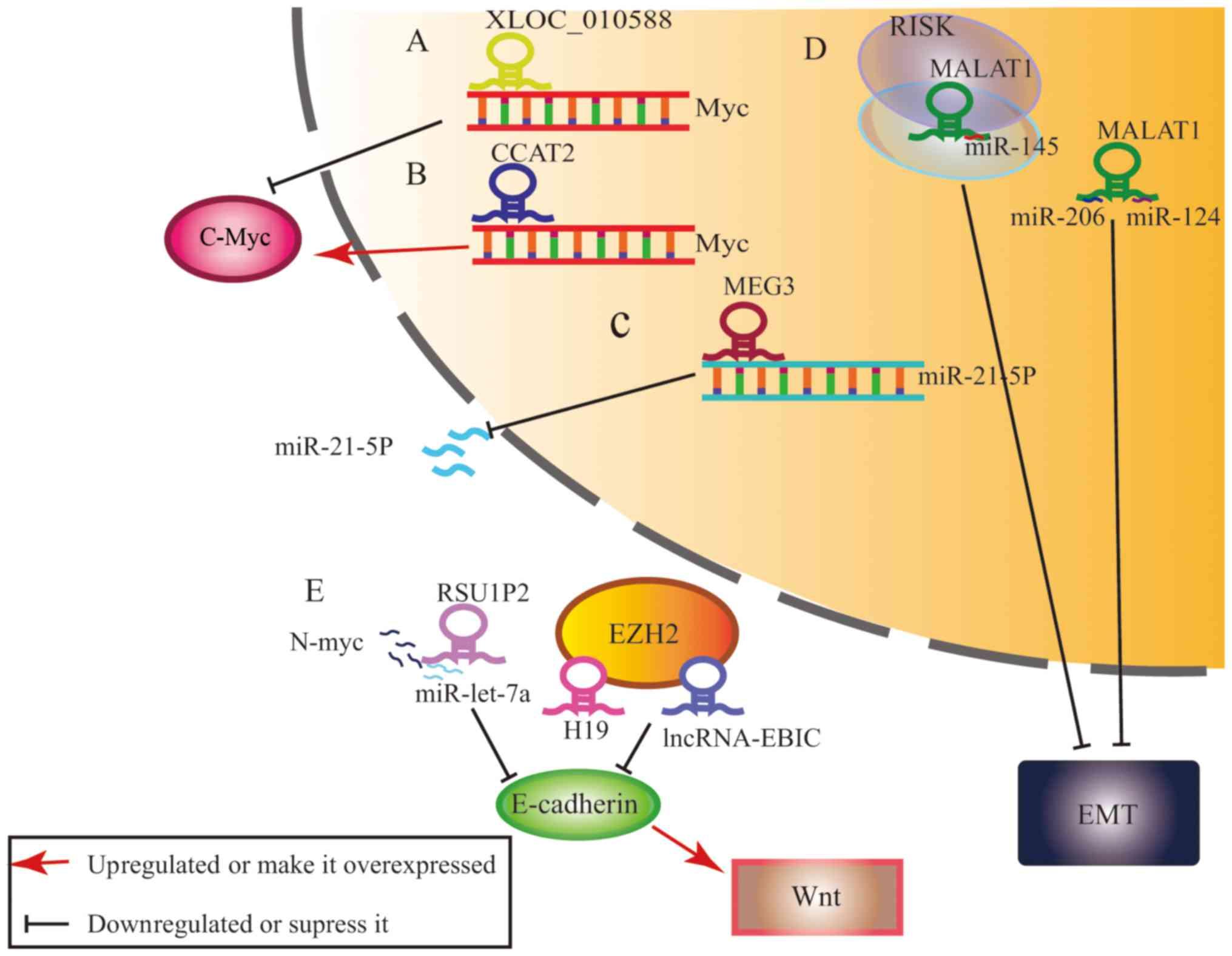 virus del papiloma humano fase 1 cancerul gastric studiu de caz