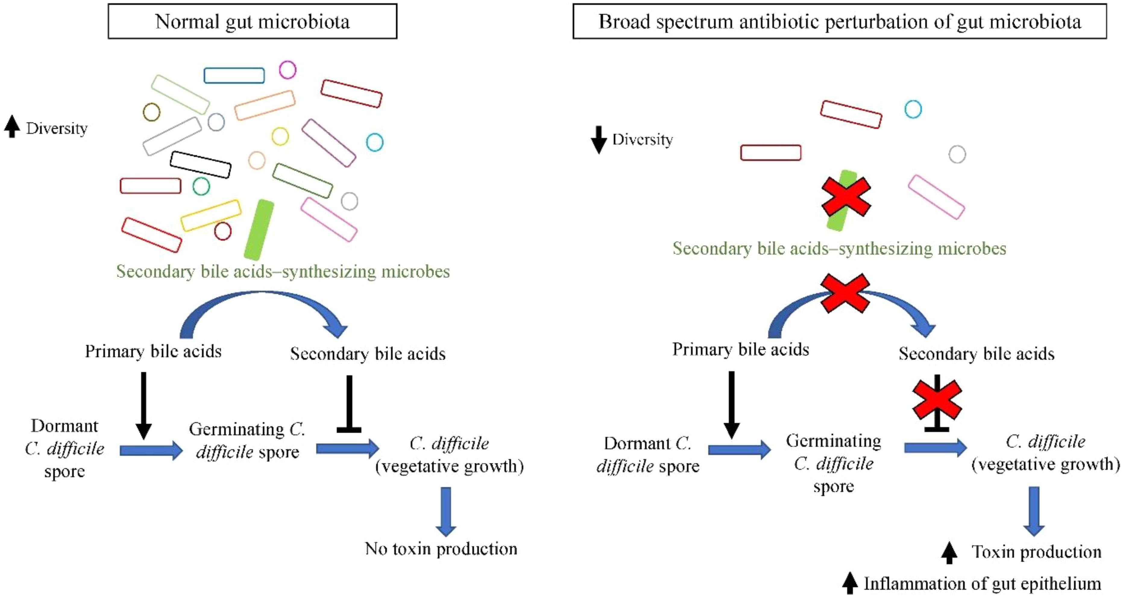 dysbiosis knockout mice