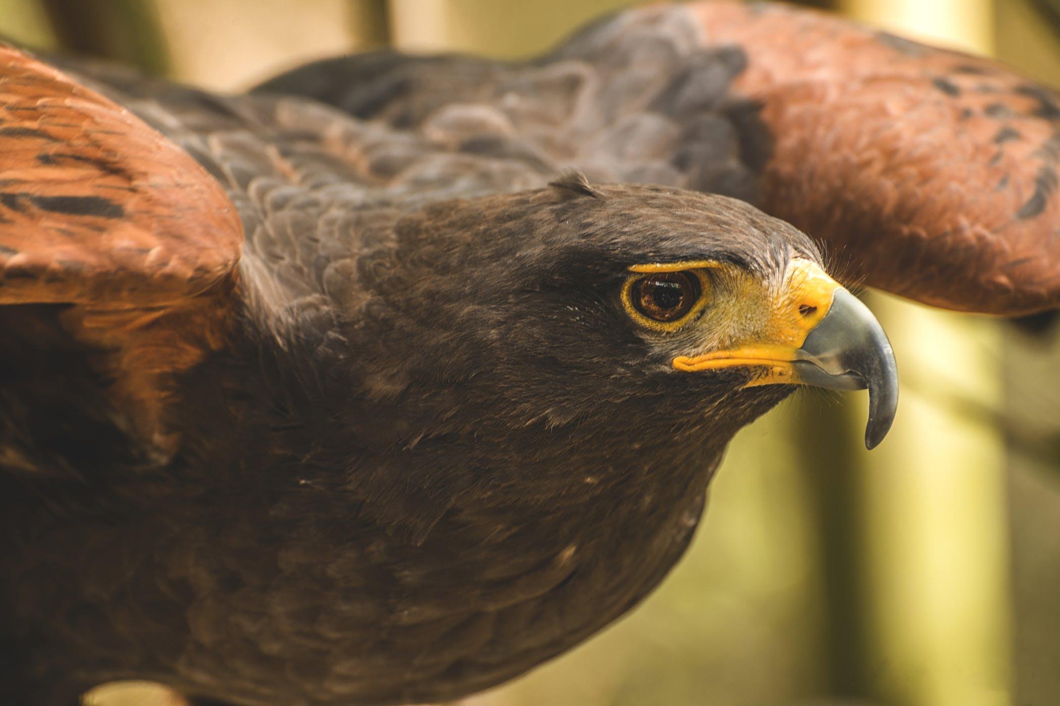 papillomatosis in bird