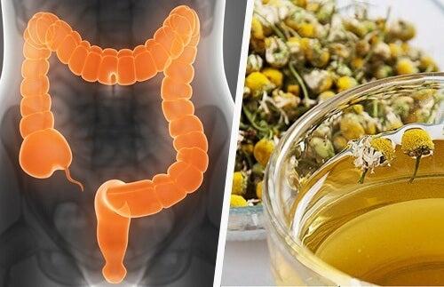 detoxifierea colonului tratament cancer renal fisiopatologia