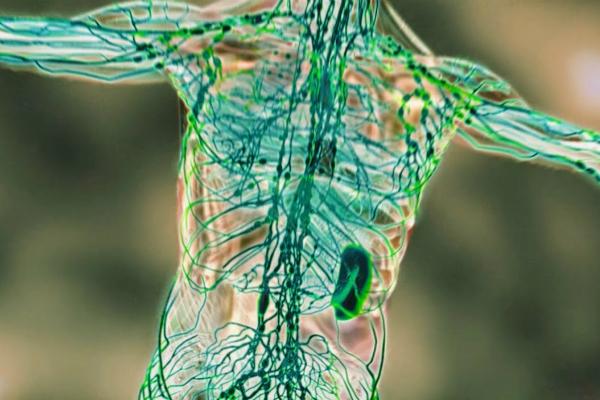 sistemul limfatic detoxifiere