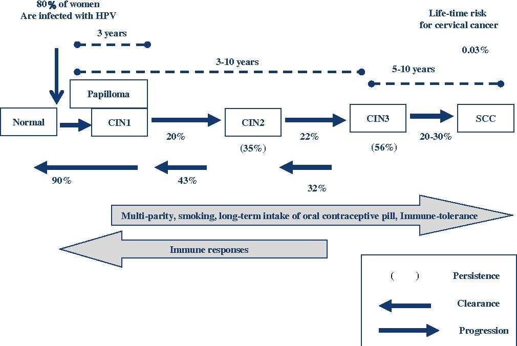 human papillomavirus and development of cervical cancer