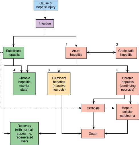 Molecular Genetics of Liver Neoplasia - ghise-ioan.ro