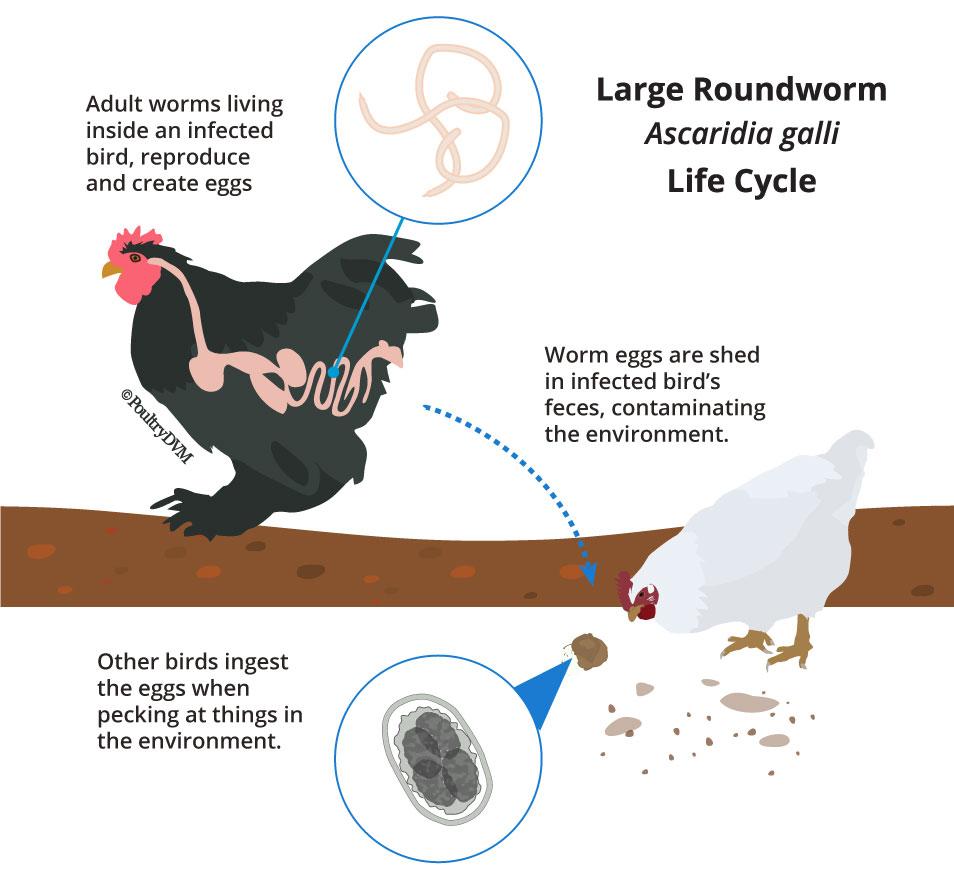 virus papiloma humano bebes detoxifierea organismului de primavara