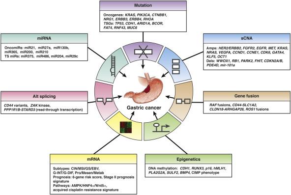 gastric cancer variant