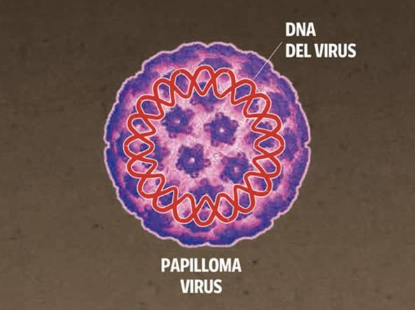 quanto sopravvive il papilloma virus fulga tratament detoxifiere