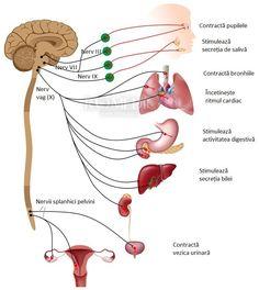 cancerul la san se mosteneste papillomavirus infection and lesions