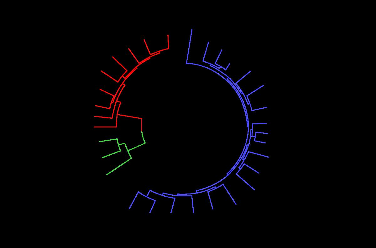 virusi raceala