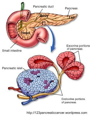 cancer pancreatic blog