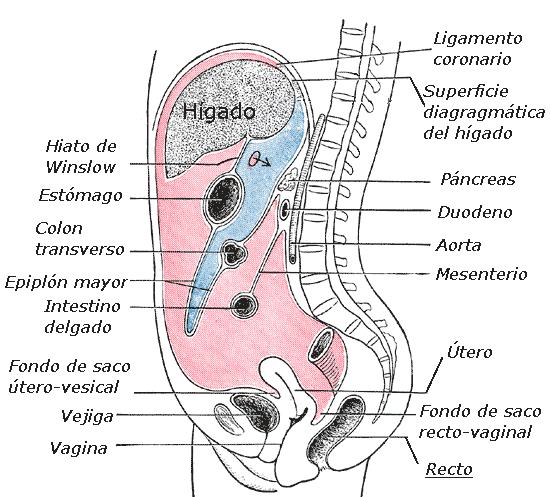 cervical cancer medscape