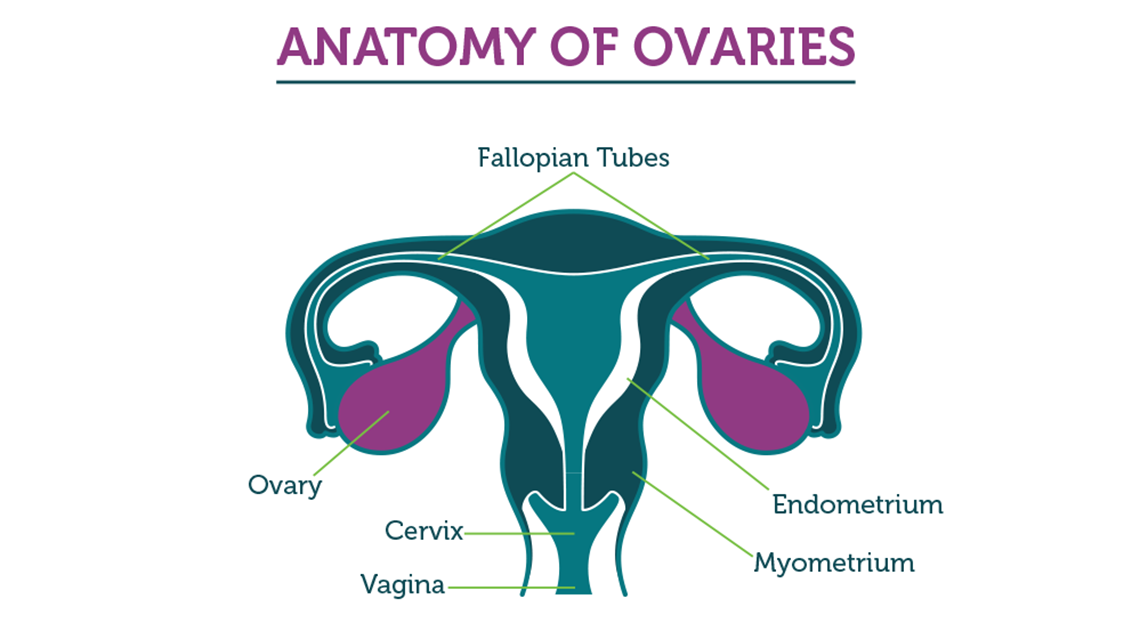 ovarian cancer reasons