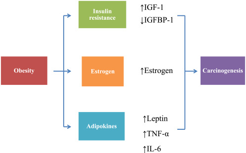 Incidentalom adrenal la o pacientă cu cancer endometrial şi sindrom metabolic
