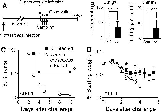 helminth infection model detoxifiere colon help
