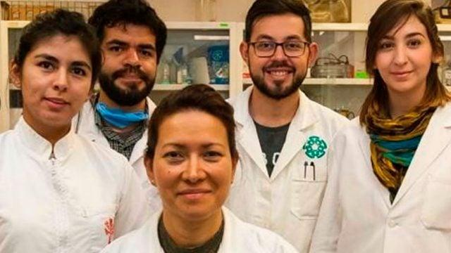 virus del papiloma humano articulos cientificos 2019 parazit ryba