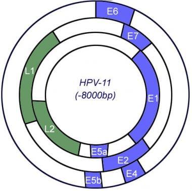 Gardasil - Wikipedia