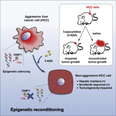 Stem Cells and Cancer in Hepatology: Yun-Wen Zheng · | Books Express