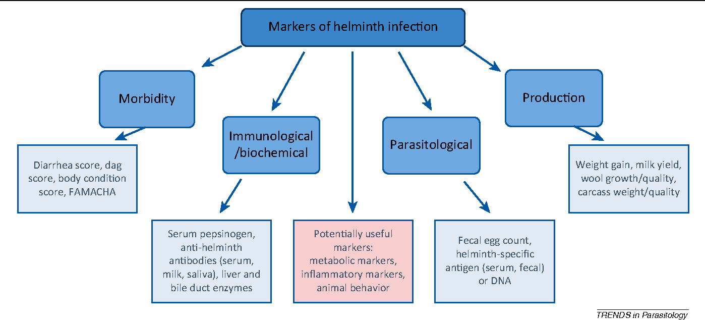 diagnosis of helminth infection requires