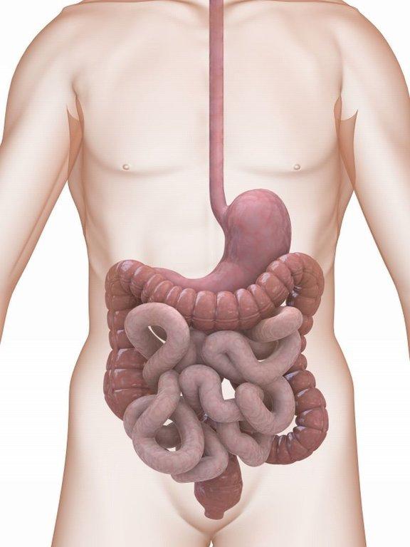 zajedalci v telesu simptomi uterine cancer kya hai
