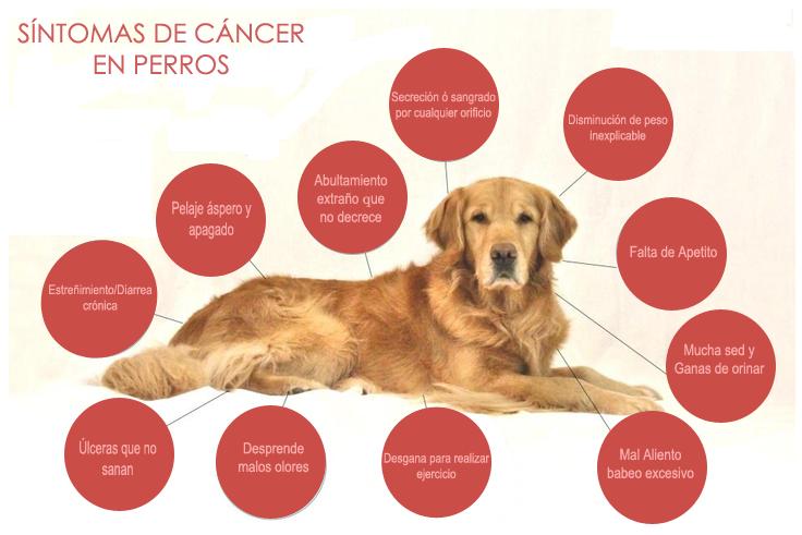 cancer testicular metastasis sintomas
