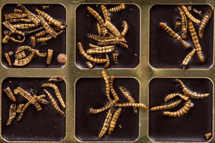 ce tratament se ia pentru paraziti intestinali