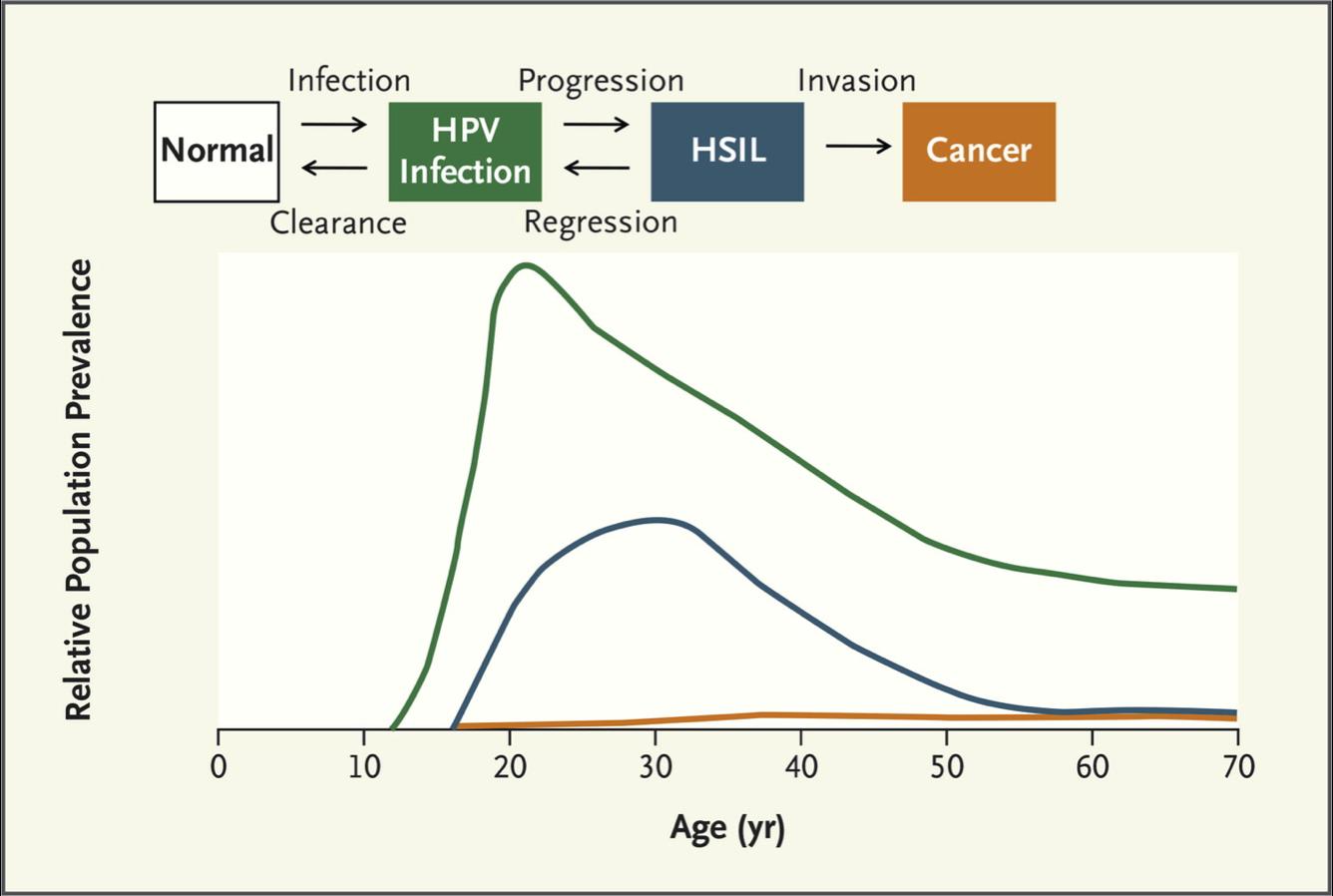 human papillomavirus transmission mode
