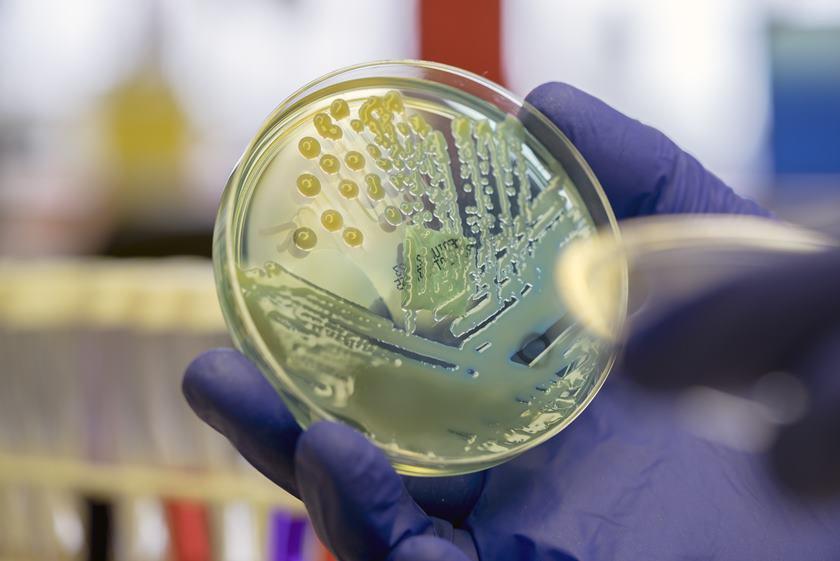 bacterie 2019