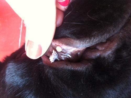 papilloma virus cani cura ovarian cancer news