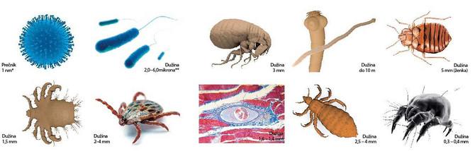 kozni paraziti kod ljudi